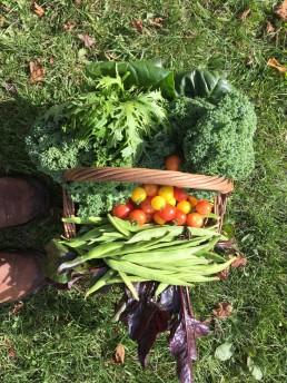 organic vegetables, homegrown vegetables, healthy food